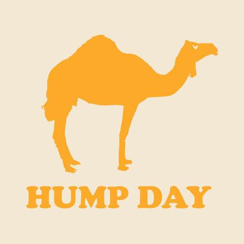 hump-day-1.jpg