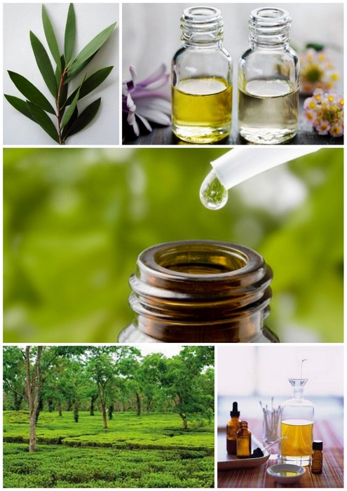 tea tree oil Best Natural Toenail Fungus Treatment